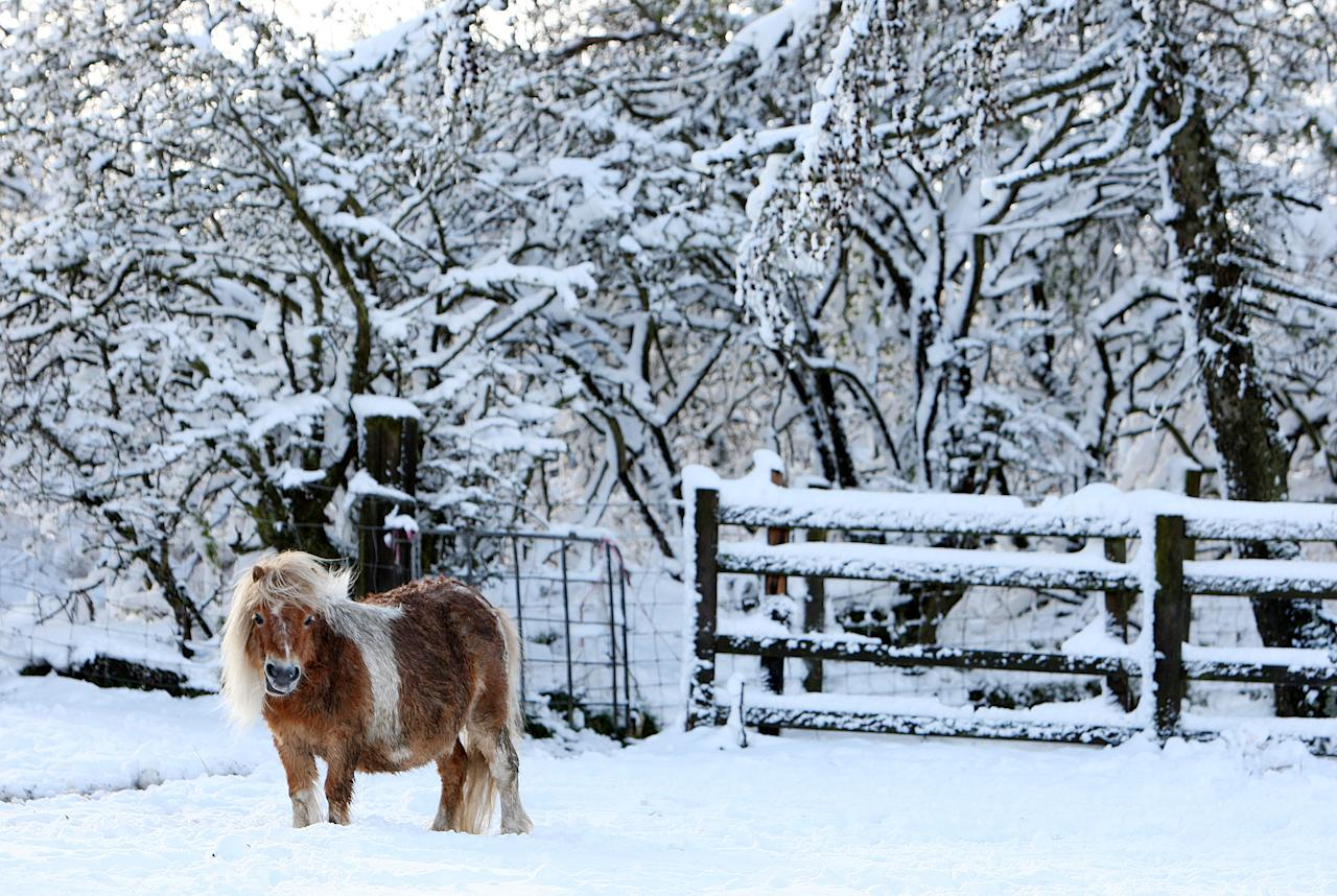 A lone shetland pony is seen surrounded by heavy snowfall at Anfield Plain, England Wednesday, April 4, 2012. Parts of Scotland and northern England have received 20 centimeters (8 inches) of snow, and 10,000 homes are without power in northeast England after wind brought down power cables. (AP Photo/Scott Heppell)