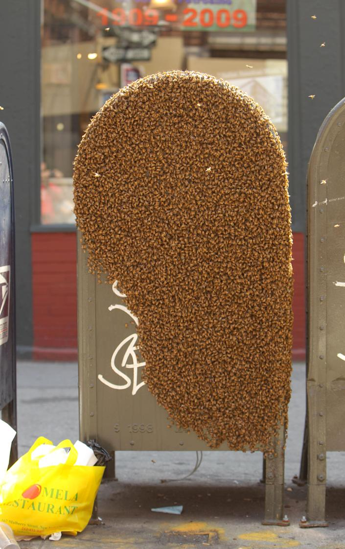 A swarm of bees disrupted life in New York City this week when they descended on this Little Italy mailbox. The block was shut down for several hours as beekeepers worked to move the insects to a safer location. (Photo: INF)