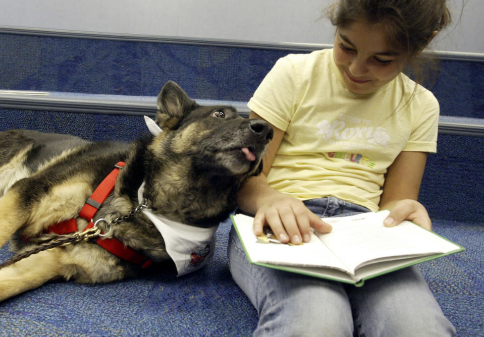 Reading to dogs has been shown to help socialize dogs and help kids improve their reading skills. When 3-year-old German shepherd Quaker (not pictured) was banned from a library in New Zealand, library staff thought it was time to adopt a similar service. (Photo: Getty Images)