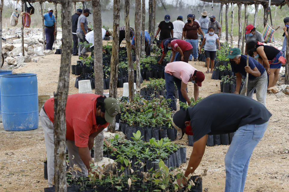 Beneficiaries of Planting Life, a jobs and reforestation program promoted by Mexican President Andres Manuel Lopez Obrador, prepare seedlings for planting in Kopoma, Yucatan state, Mexico, Thursday, April 22, 2021. President Lopez Obrador is making a strong push for his oft-questioned tree-planting program, trying to get the United States to help fund expansion of the program into Central America as a way to stem migration. (AP Photo/Martin Zetina)