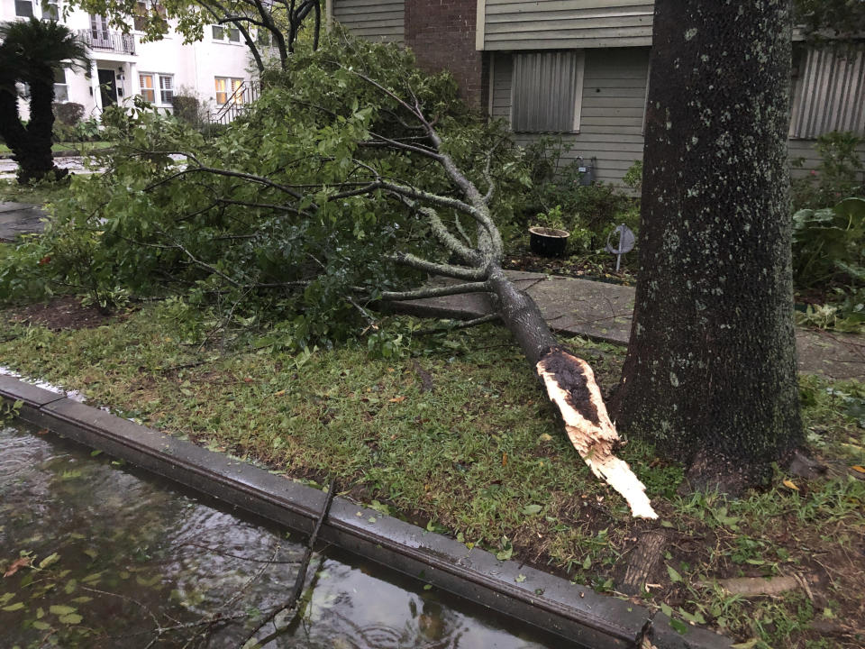 Part of a tree nearly hit a house in an Uptown neighborhood of New Orleans during Hurricane Zeta, Wednesday, Oct. 28, 2020. High winds from Zeta took down some trees, left branches strewn across the streets, and led to widespread power outages across the region. (AP Photo/Kevin McGill)