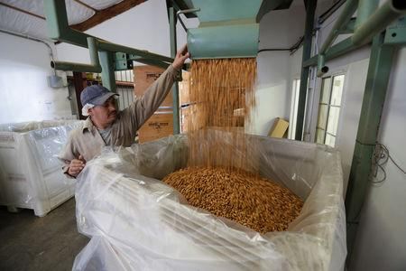 Carmelo Morillo fills a shipping container with almonds at Capay Canyon Ranch in Esparto, California