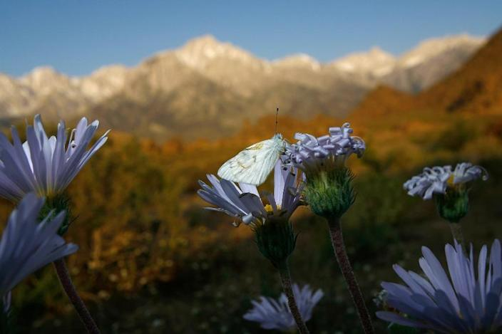 Alpine peaks of the Sierra Nevada rise in the distance on May 9, 2008 near Lone Pine, California (AFP Photo/David Mcnew)