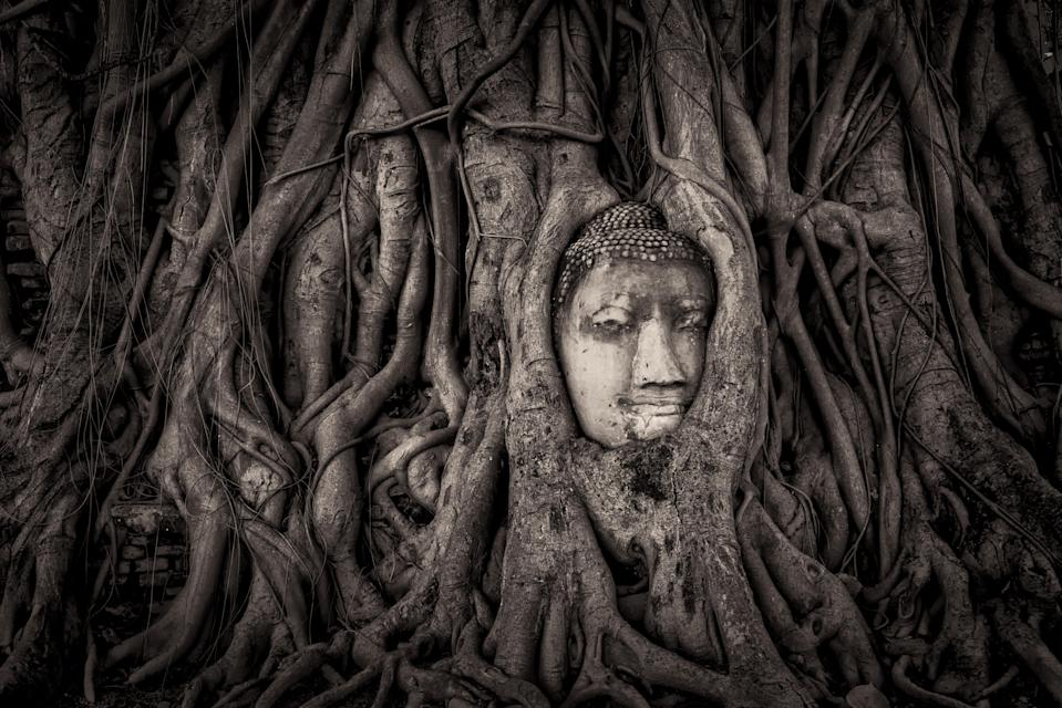 <p>While some focused on landscapes or the bigger picture, many photographers chose to pinpoint the small details. (Historic Photographer of the Year) </p>