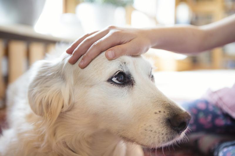 Your Pets Are Not Likely to Get or Transmit Coronavirus. Here's What the Experts Say