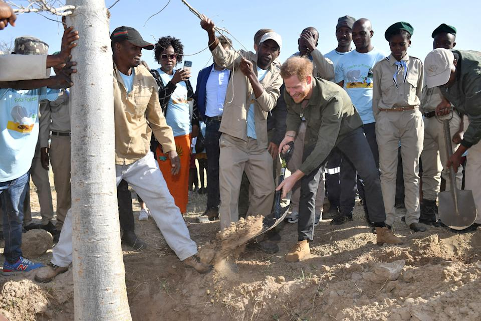 CHOBE NATIONAL PARK, BOTSWANA - SEPTEMBER 26: Prince Harry, Duke of Sussex helps to plant trees at the Chobe Tree Reserve in Botswana, on day four of their tour of Africa on September 26, 2019 in Chobe National Park, Botswana. (Photo by Dominic Lipinski - Pool /Getty Images)
