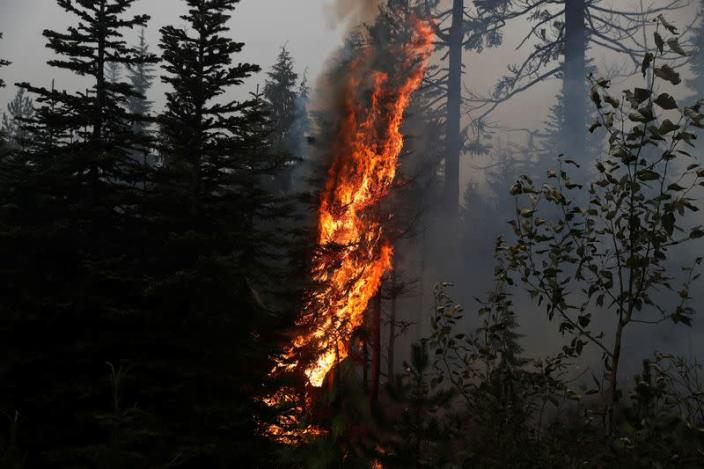 Fire burns on the remains of fire damaged trees as smoke billows in the aftermath of the Beachie Creek fire near Detroit, Oregon