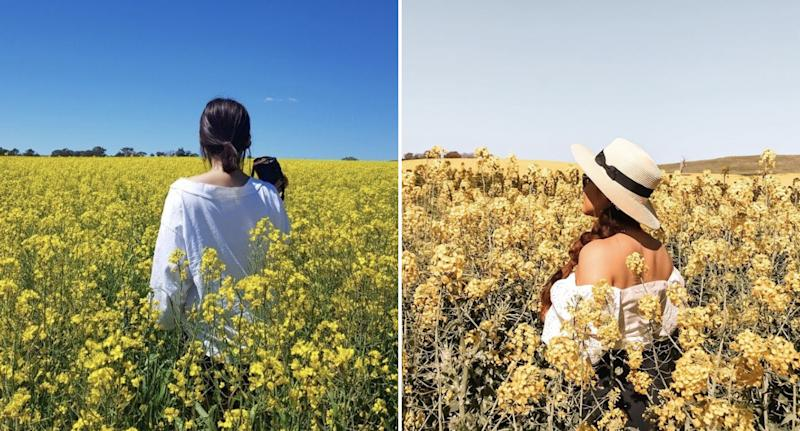 Women pictured in canola fields.