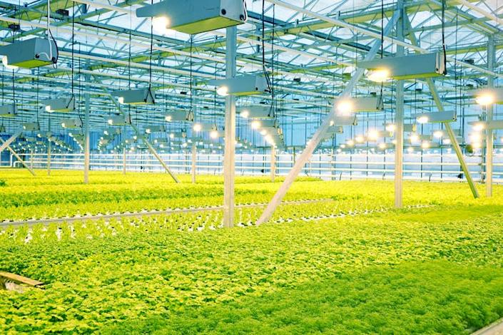 """<span class=""""caption"""">Grown in commercial greenhouses or shipped from overseas – which is better for the planet?</span> <span class=""""attribution""""><a class=""""link rapid-noclick-resp"""" href=""""https://www.shutterstock.com/image-photo/growing-cucumbers-greenhouse-1022292085"""" rel=""""nofollow noopener"""" target=""""_blank"""" data-ylk=""""slk:ANDREY-SHA74/Shutterstock"""">ANDREY-SHA74/Shutterstock</a></span>"""