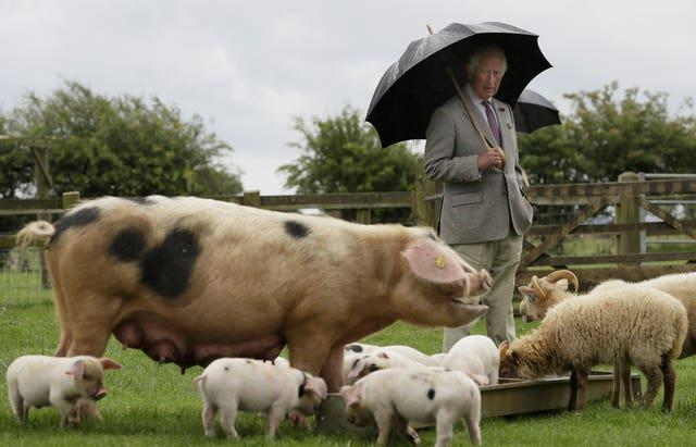 Charles will launch his Terra Carta later. Kirsty Wigglesworth/PA Wire
