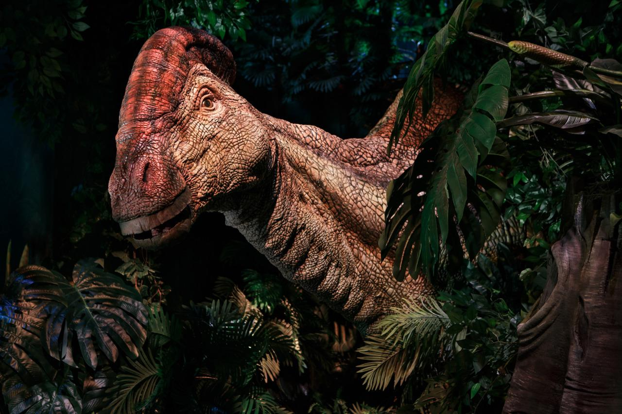 <p>This crested herbivore is part of the Gentle Giants section, sharing space with the massive Brachiosaurus (Photo: James Thomas/The Franklin Institute) </p>