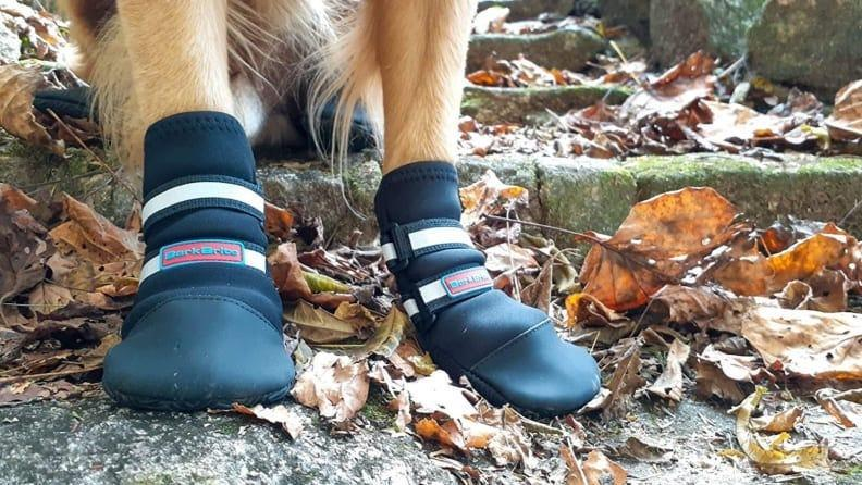 Prevent your pup's paws from getting injured.
