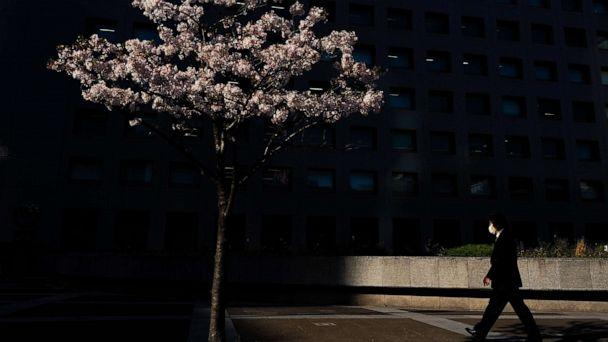 PHOTO: A man wearing a face mask walks past a cherry tree in Tokyo, Japan, on April 6, 2020. (Jae C. Hong/AP)