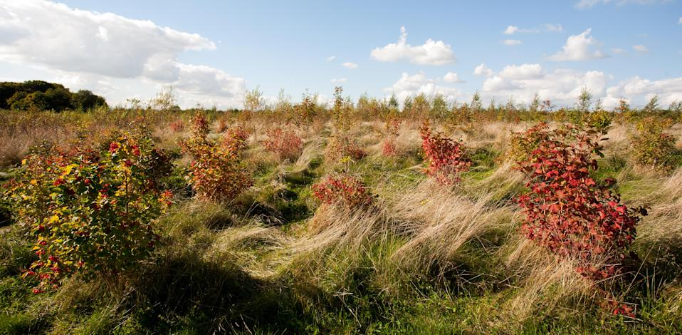 Young woodland at Heartwood Forest (Judith Parry/WTML/PA)