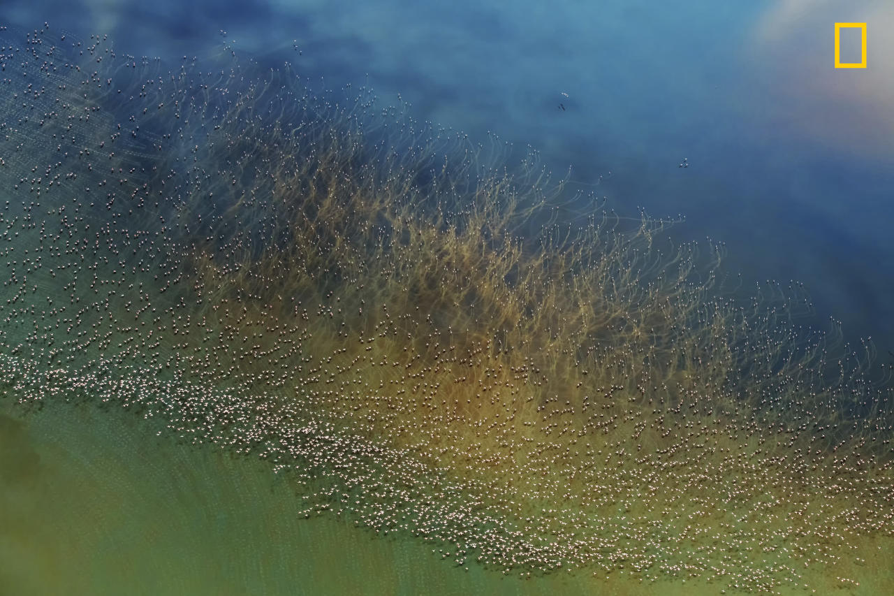 "<p>Photograph and caption by Hao j./National Geographic Travel Photographer of the Year Contest. — ""Thousands of flamingos take off from the colorful salt Lake Natron in Tanzania. Before taking off, flamingos need to take a short run on water to build up some speed. At this time, their long, red legs trod a series of water ripples on the surface of the lake. Looking down from the helicopter, these ripple lines look like giant aquatic plants flowing in the water. This photo was taken from a helicopter."" Lake Natron, Tanzania. </p>"