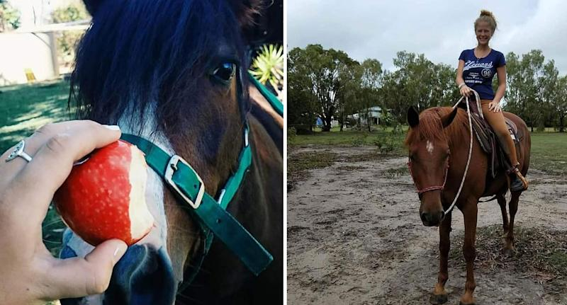 Horses on the Sunshine Coast that were freed as bushfire forced owners to evacuate.