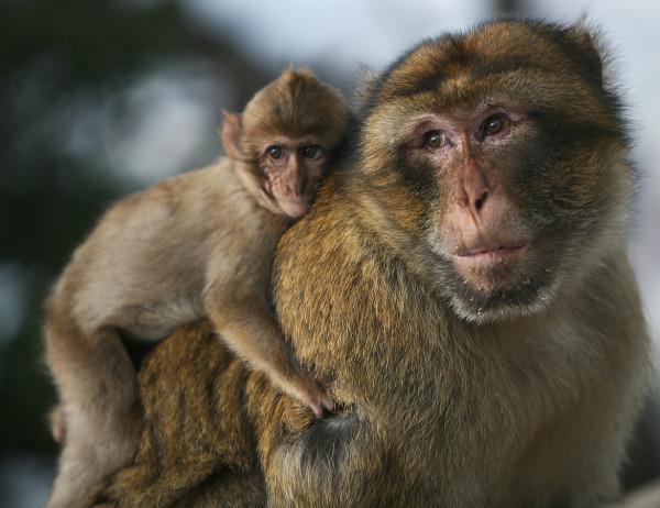 """Monkeys are not housepets! I don't care if you're a pirate! Source <a href=""""https://commons.wikimedia.org/wiki/File:Portrait_of_a_father.jpg"""" rel=""""nofollow noopener"""" target=""""_blank"""" data-ylk=""""slk:Wikimedia Commons"""" class=""""link rapid-noclick-resp"""">Wikimedia Commons</a>"""