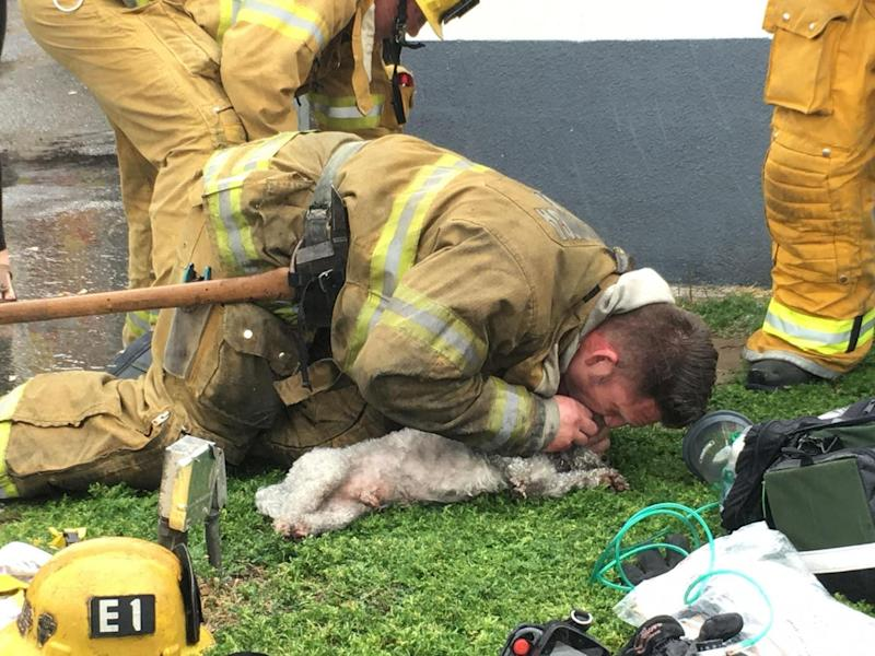 The firefighter used mouth-to-mouth CPR and an oxygen mask to bring the pooch back to life (Instagram/@Billy_Fernando)