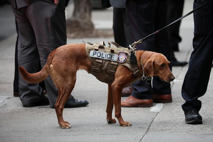<p>A police dog assists in a suspicious package response in the Manhattan borough of New York City, Oct. 26, 2018. (Photo: Mike Segar/Reuters) </p>