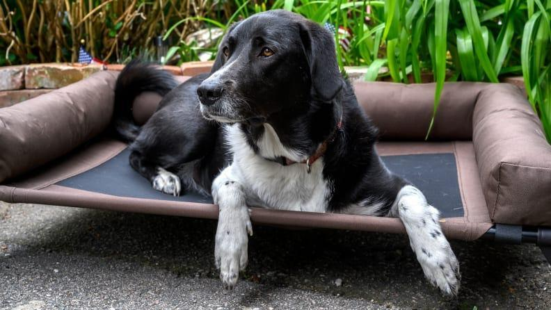 The K&H Original Bolster Pet Cot Elevated Dog Bed is the best dog bed we tested.