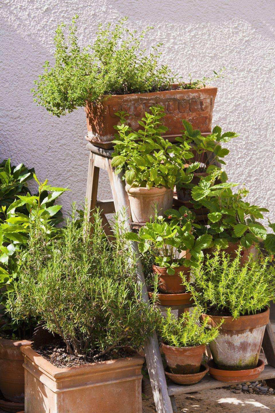 <p>If you have a wooden ladder that you no longer need, dress it up with a garden bed and an arrangement of potted plants. </p>