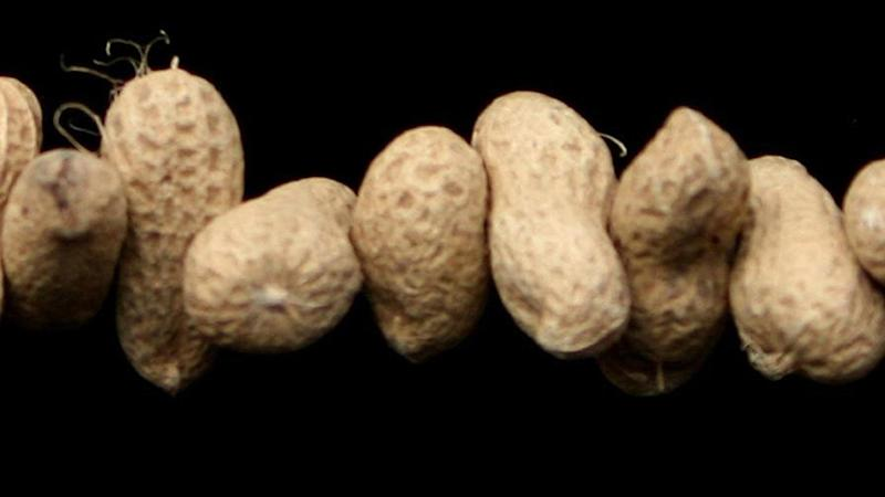 Peanut allergy sufferers 'may have new protection against severe reactions'