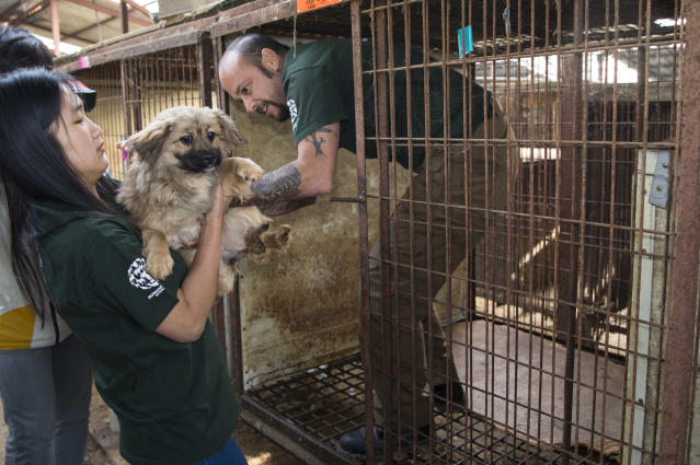 <p>In this image released on Thursday, April 28, 2016, HSI rescuer Adam Parascandola rescues a dog from a cage and hands him over to Borami Seo to be prepped for transport. Humane Society International rescued the dogs from a dog meat farm in Wonju, South Korea this week, the fifth such farm that the organization has closed down as part of its campaign to end the dog meat trade. A total of 171 dogs are being flown to shelters and rescues in the United States and Canada for a second chance at life. (Meredith Lee/Humane Society International via AP Images) </p>