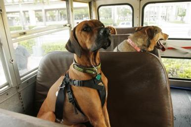 dogs on the bus