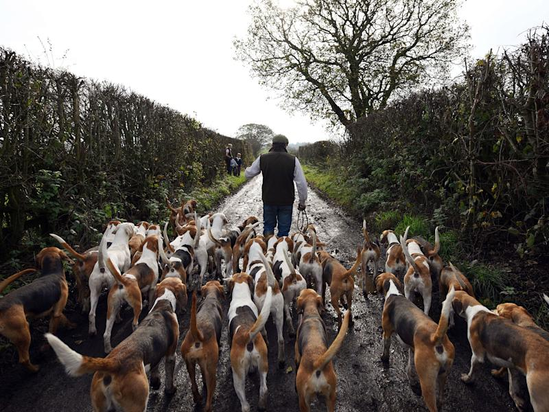 Trail hunting was taken up by many countryside groups with the introduction of the fox-hunting ban: Getty
