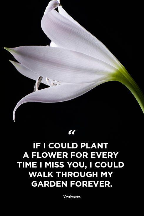 "<p>""If I could plant a flower for every time I miss you, I could walk through my garden forever.""</p>"