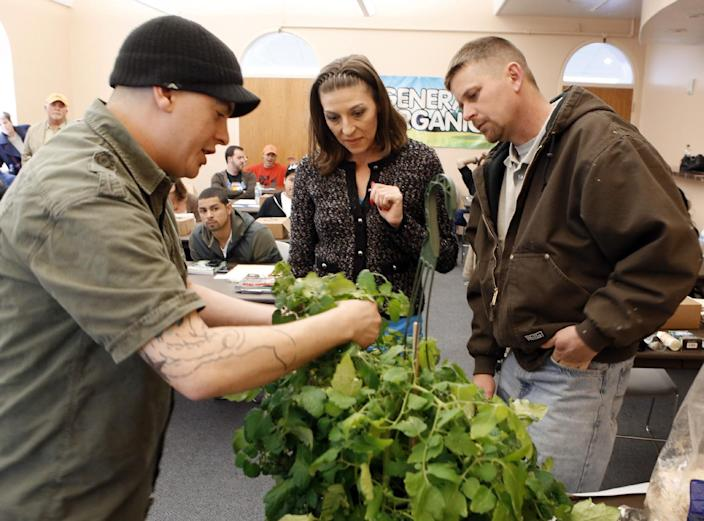"""In this photo taken on Saturday, Feb. 9, 2013, instructor Ted Smith, left, shows Ginger and Heath Grider how to cut and plant a section of a tomato plant during class at THC University at the Tivoli in Denver. Marijuana can be grown from seed, or from a clipping off a """"mother"""" marijuana plant. Clones, as the clippings are called, grow faster and produce smokeable marijuana much more quickly than seeds. But seeds can be worth the wait, producing hardier marijuana. (AP Photo/Ed Andrieski)"""