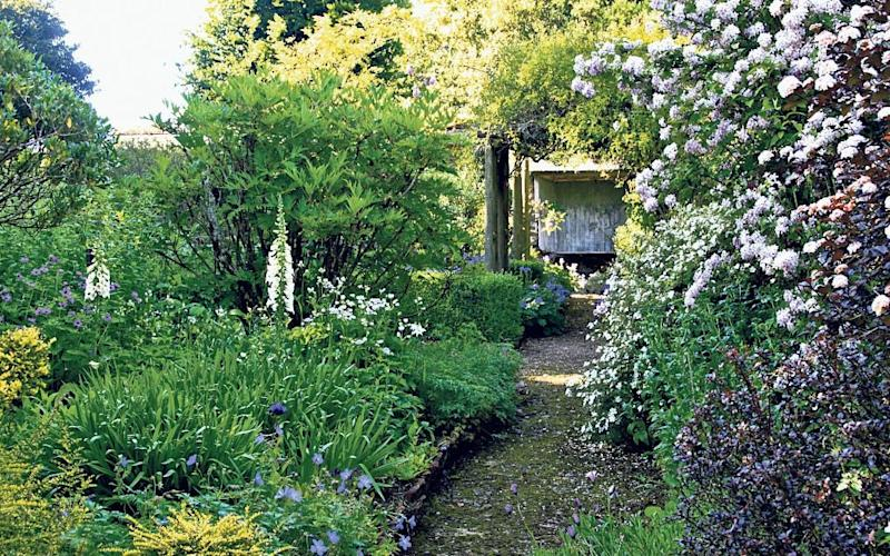 Quiet corner: The old walled garden, above, where Alasdair Forbes indulges his love of flowers - Alasdair Forbes