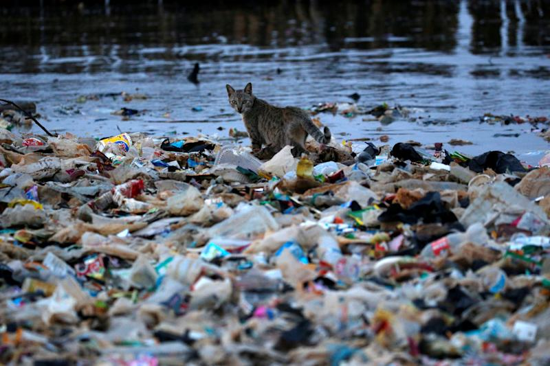 A cat is seen among rubbish at a shoreline in Jakarta, Indonesia. (Photo: Willy Kurniawan/Reuters)