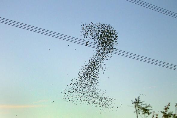 photo of starlings in the sky show amazing formations