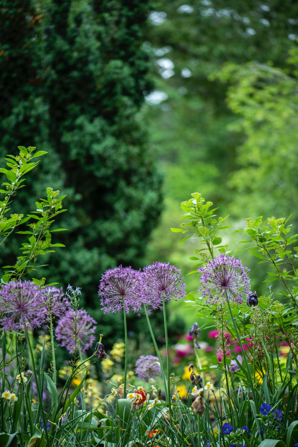 How much does landscaping cost?: planting