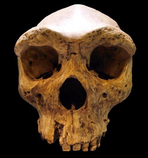 """<span class=""""caption"""">Homo rhodesiensis is an example of an archaic human. </span> <span class=""""attribution""""><span class=""""source"""">wikipedia</span>, <a class=""""link rapid-noclick-resp"""" href=""""http://creativecommons.org/licenses/by-sa/4.0/"""" rel=""""nofollow noopener"""" target=""""_blank"""" data-ylk=""""slk:CC BY-SA"""">CC BY-SA</a></span>"""