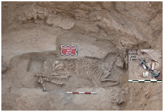 Bronze-Age Donkey Sacrifice Found in Israel