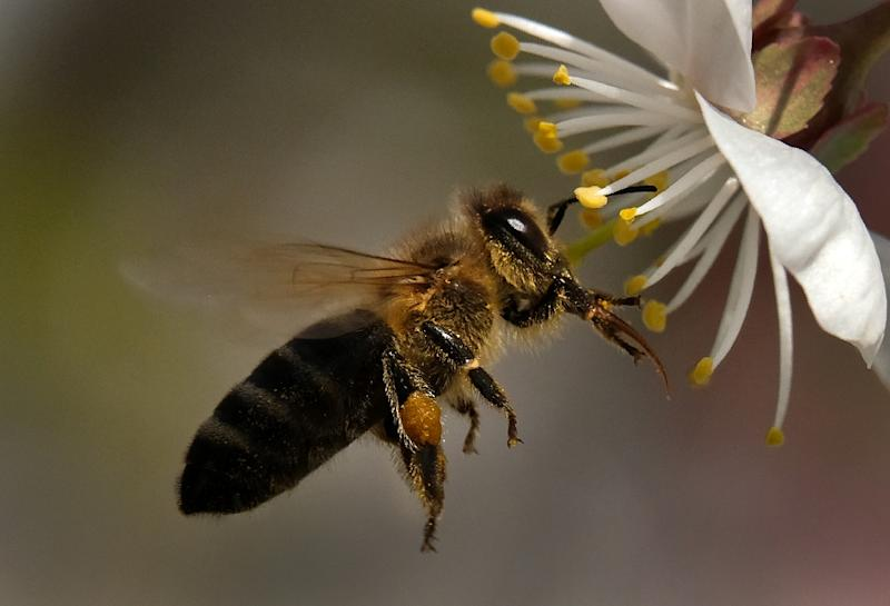 Environmental groups, which have long campaigned for a ban on neonicotinoids, were abuzz (AFP Photo/Yuri KADOBNOV)