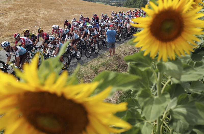 The pack rides past a sunflowers field during the eleventh stage of the Tour de France cycling race over 167 kilometers (103,77 miles) with start in Albi and finish in Toulouse, France, Wednesday, July 17, 2019. (AP Photo/Thibault Camus)