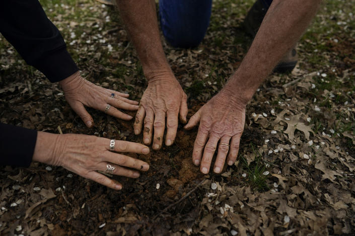 After returning the cicada nymphs where they found them, University of Maryland entomologists Michael Raupp and Paula Shrewsbury gently pat the dirt over them in a suburban backyard in Columbia, Md., Tuesday, April 13, 2021. (AP Photo/Carolyn Kaster)