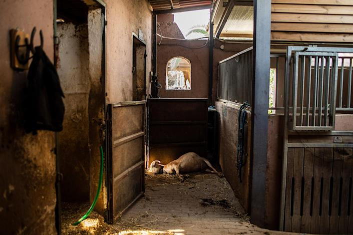 """A dead goat lies on the ground in a burnt-out riding club after a forest fire in the Varibobi region of northern Athens, Greece on Aug. 4.<span class=""""copyright"""">Angelos Tzortzinis—DPA/picture alliance/Getty Images</span>"""