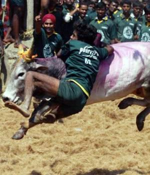 Tamil Nadu: Sivagangai Jallikattu attempts Guinness record, ends in tragedy with 2 deaths