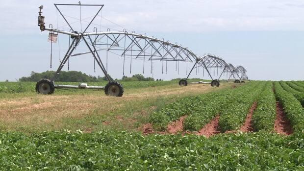 Irrigation equipment like this can move water from holding ponds, which can be fed from wells or naturally collect rainwater.
