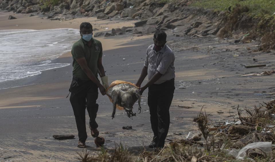 Sri Lankan wild life workers remove decomposed remains of a turtle lies on a beach polluted following the sinking of a container ship that caught fire while transporting chemicals off Kapungoda, outskirts of Colombo, Sri Lanka, Monday, June 21, 2021. X-Press Pearl, a Singapore-flagged ship sank off on Thursday a month after catching fire, raising concerns about a possible environmental disaster. (AP Photo/Eranga Jayawardena)