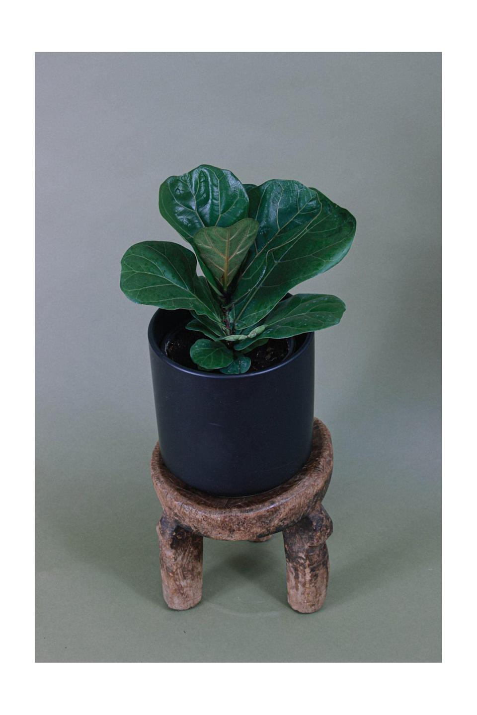 """<p><strong>Grounded</strong></p><p>grounded-plants.com</p><p><strong>$30.00</strong></p><p><a href=""""https://grounded-plants.com/products/fiddle-leaf-fig"""" rel=""""nofollow noopener"""" target=""""_blank"""" data-ylk=""""slk:Shop Now"""" class=""""link rapid-noclick-resp"""">Shop Now</a></p><p>Some partners might prefer plants over roses. For those green thumb cuties, Grounded is a great option. The indie shop aims to """"help you disconnect and decompress through the appreciation of plants,"""" and ships nationwide. </p>"""