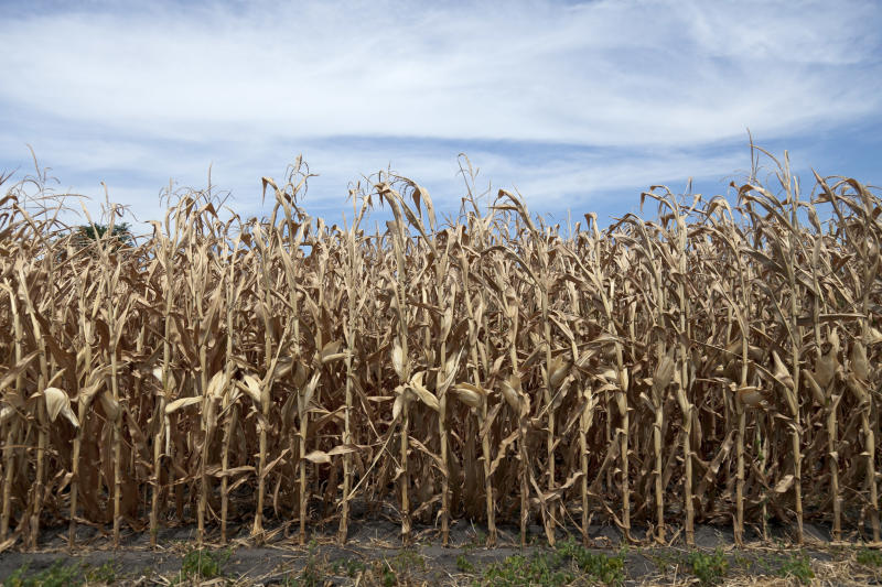 US farmers expect poorest corn crop in a decade