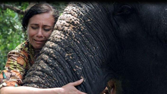 Sangita Iyer says she fell in love with the cow elephant Lakshmi as soon as she saw it