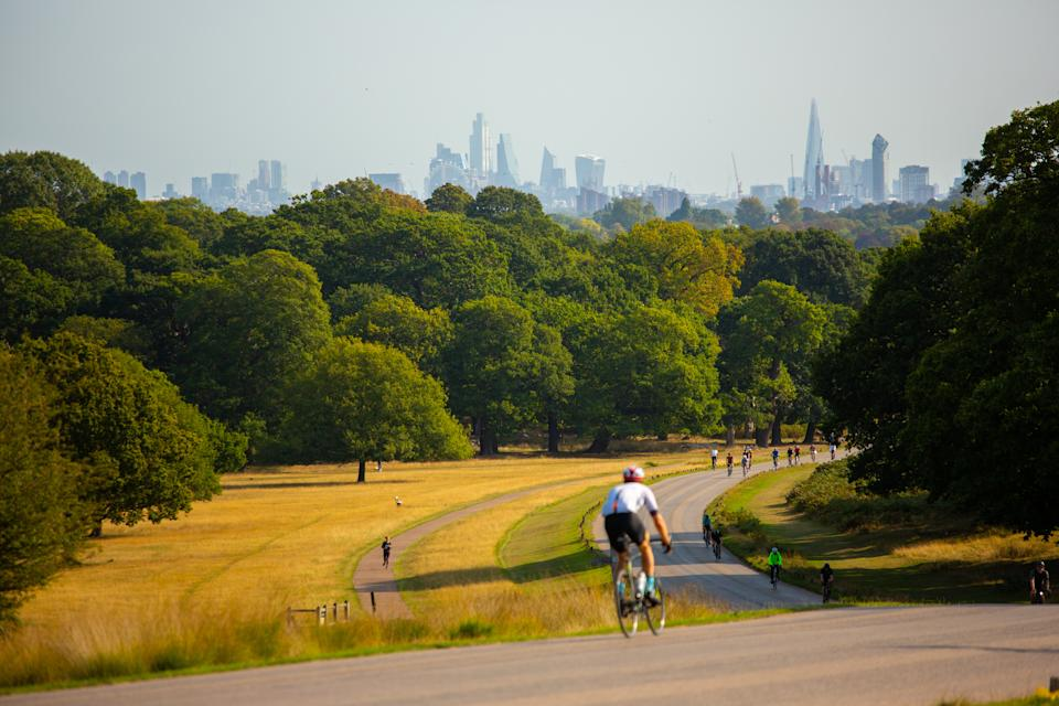 wildlife in Richmond Park, deers, birds, London Skyline