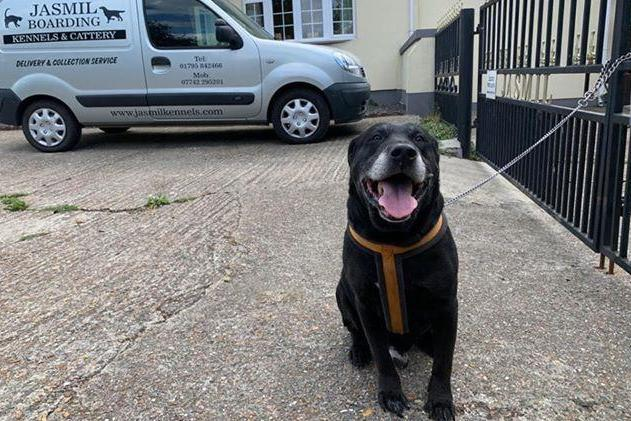 Jasmil Kennels found a black labrador tied to their railings on July 6 with a note from the owner: Jasmil Kennels