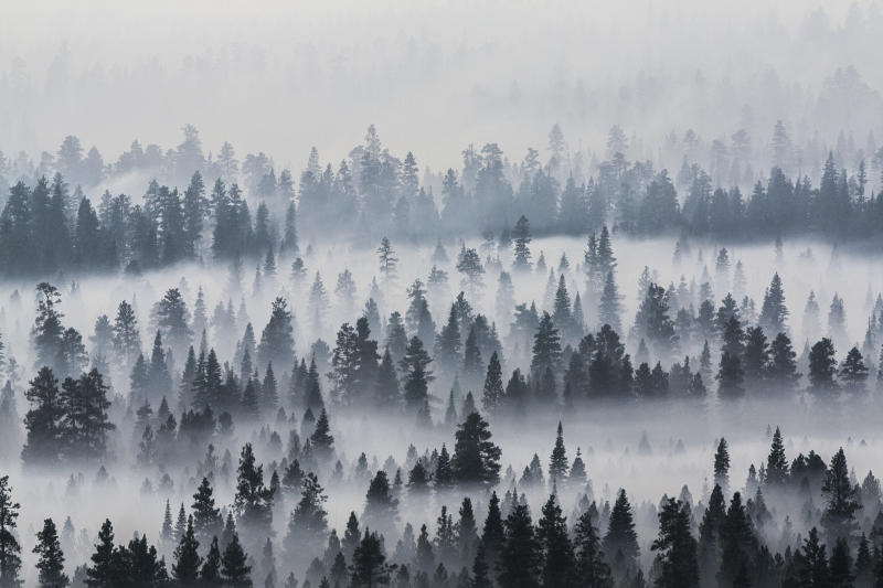 FILE--In this Aug. 27, 2017, file photo, smoke from a wildfire west of Sisters, Ore., blankets the Deschutes National Forest. Wildfires that are blackening the American West in one of the nation's worst fire seasons have ignited calls to thin forests that have become choked with trees. (Fedor Zarkhin/The Oregonian via AP, file)